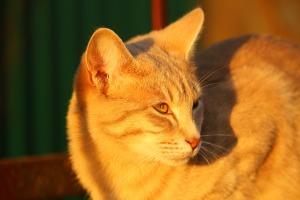 cat-1040789_960_720