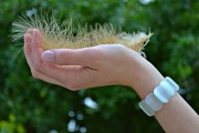 feather-1080956_960_720