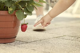 strawberry-619397__180