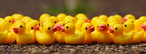 ducks-1339545__180