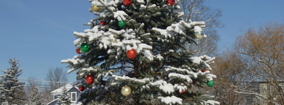 christmas-tree-1908900_960_720