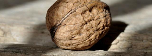 walnut-658569_960_720