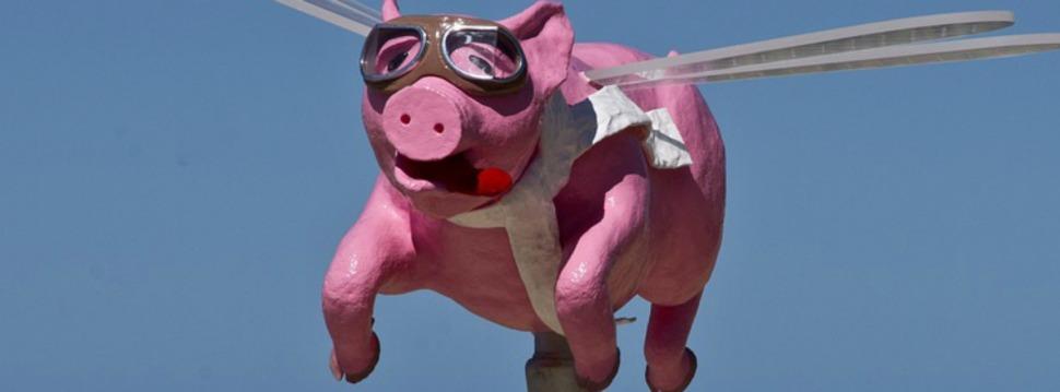 Fliegendes SchweinI