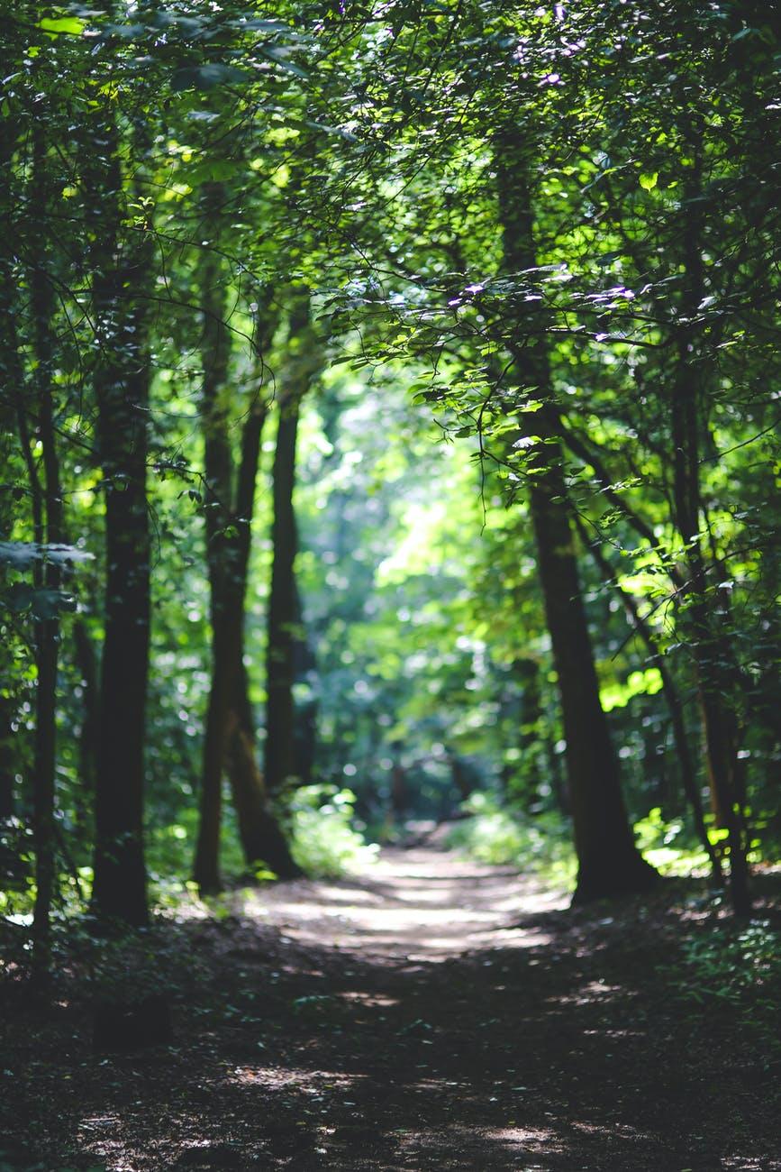 Dieses Bild hat ein leeres alt-Attribut; sein Dateiname ist nature-forest-trees-path.jpg.