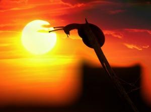 Schnecke im Sonnenuntergang